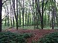 Гермаківська бучина, Гермаківське л-во, кв. 2 в. 2, лісове урочище Дача Романського.jpg