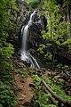 Делнично спокойствие край Боянски водопад.jpg
