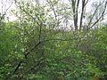 Дендрологічний парк 249.jpg
