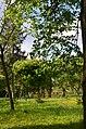 """Дендропарк """"Подолье"""" город Хмельницкий. Фото 28.jpg"""