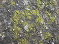 Камень дайнаўскі. Дайнава (09).jpg