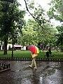 Парк «Міський сад».jpg