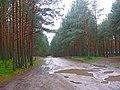 После дождя. - panoramio.jpg
