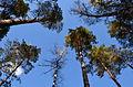 Рязанская область.Лес.JPG