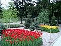 Тюльпани цвітуть в екопарку.JPG