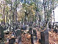 בית הקברות היהודי בקרקוב - קברים (11).jpg