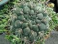 گلخانه کاکتوس دنیای خار در قم. کلکسیون انواع کاکتوس 27.jpg