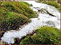 گل وبرف - panoramio.jpg