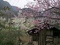 向阳桃花 - panoramio.jpg