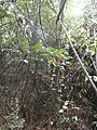 """咸宁市""""一级保护""""之的原生态孝子山的山林 - panoramio.jpg"""