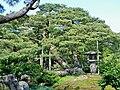 唐崎松 Karasaki Pine - panoramio (1).jpg