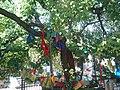 法禧寺的菩提 - panoramio.jpg