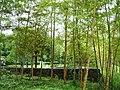 福島空港公園 - panoramio.jpg