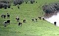 边境线控制区内的牧场(五卡-七卡)【路人】 - panoramio.jpg