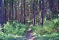 00-10-01, trail in forest - panoramio.jpg