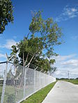 02461jfHour Great Rescue Concentration Prisoners Sundials Cabanatuan Memorialfvf 19.JPG