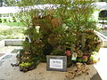 05593jfMidyear Orchid Exhibits Quezon Cityfvf 32.JPG