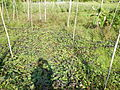 0581jfLandscapes Roads Vegetables Fields Binagbag Angat Bulacanfvf 23.JPG