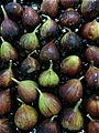 149 - figs.jpg