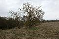 15-03-15-Angermünde-RalfR-DSCF2865-04.jpg