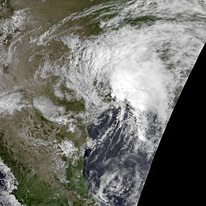 1981 Atlantic hurricane season