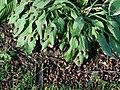 2004May21-Cicada (6).JPG