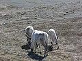 2005-05-28 15 18 36 Iceland-Víðirhóll.JPG