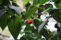 2009 Berry in Wuhan.JPG
