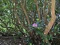 2012-05-15 Rhododendronpark Rathen 4.JPG