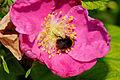 2014-06-16 13-20-13 apidae.jpg