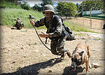 2015.9.8.연평부대-탐색작전 8th Sep. 2015. YP Unit - Explotation Operation (21607309121).jpg