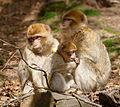 2016-04-21 14-58-08 montagne-des-singes.jpg