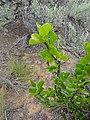 2016.05.28 15.08.06 DSC04541 - Flickr - andrey zharkikh.jpg