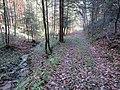 2017-11-24 (102) Leitengraben at Haltgraben, Frankenfels, Austria.jpg