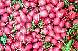 210704 radieschen-raphanus-sativus-marktware 1-640x480.jpg