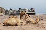 26th MEU Djibouti LCAC Landings 130527-M-SO289-014.jpg