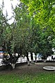 46-112-5005 Stryi Taxus Baccata RB 18.jpg