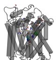 File:A-Steered-Molecular-Dynamics-Study-of-Binding-and-Translocation-Processes-in-the-GABA-Transporter-pone.0039360.s011.ogv