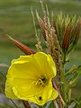 A Bouquet by nature (14600811831).jpg