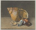A Cowrie, and a Larger and Two Smaller Shells MET DP838580.jpg