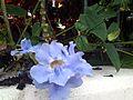 A identificar floracion nocturna (5).JPG