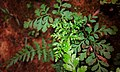 A mini plant.jpg