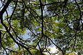 A natureza e o céu.jpg