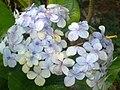 A scene of botanical garden Ooty 11.jpg