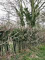 A section of old fence - geograph.org.uk - 756348.jpg