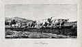 A team of oxen being made to pull a plough. Engraving by P. Wellcome V0021644.jpg
