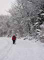 A walker on the Black Path, Galashiels - geograph.org.uk - 1650268.jpg