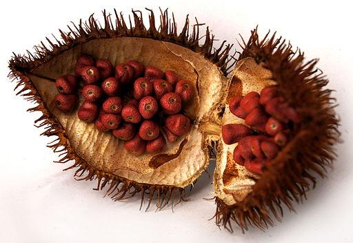 fruto del achiote, onoto, annato, urucú, bija