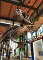 Acrocanthosaurus in Naylor Family Dinosaur Gallery.jpg
