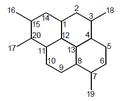 Adociano - Estructura.png